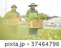 人物 男性 外国人の写真 37464796