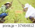 野菜 収穫 農家の女性と外国人男性 37464812