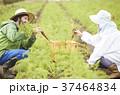 野菜 収穫 農家の女性と外国人男性 37464834