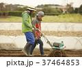男性 外国人 農業の写真 37464853