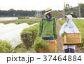 農家の女性と外国人男性 37464884