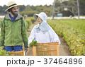 農家の女性と外国人男性 37464896