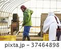 男性 外国人 農家の写真 37464898
