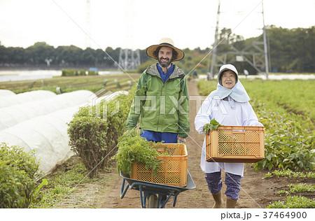 農家の女性と外国人男性 37464900