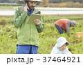 野菜の収穫 農家と外国人男性 タブレット 37464921