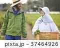 外国人 農家 農業の写真 37464926