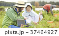 外国人 農家 農業の写真 37464927