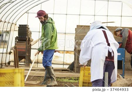農家 出荷作業 外国人男性 37464933