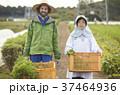 農家の女性と外国人男性 37464936