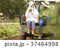 人物 農家 農業の写真 37464998