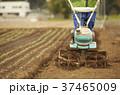 男性 農業 畑の写真 37465009