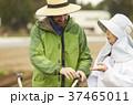 人物 農家 農業の写真 37465011