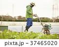 人物 男性 農業の写真 37465020