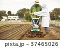 男性 外国人 農家の写真 37465026