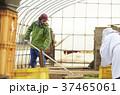 男性 外国人 農家の写真 37465061