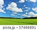 青空 雲 田んぼの写真 37466891
