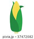 トウモロコシ コーン とうもろこしのイラスト 37472082