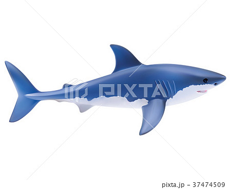 Shark isolated on white. realistic vector  37474509