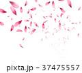 桜 サクラ ベクターのイラスト 37475557