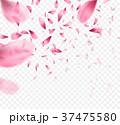 桜 サクラ ベクターのイラスト 37475580