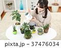 植物女子 37476034