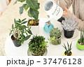 植物女子 37476128