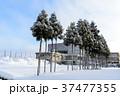 木 雪 積雪の写真 37477355