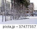 木 雪 積雪の写真 37477357