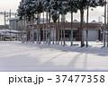木 雪 積雪の写真 37477358