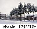 木 雪 積雪の写真 37477360