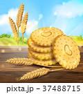 ベクトル クッキー むぎのイラスト 37488715