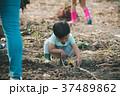 畑 子供 いも掘りの写真 37489862