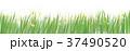 草 牧草地 野原のイラスト 37490520