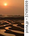 新舞子 干潟 サンライズの写真 37490809