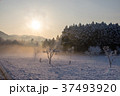 太陽 雪 雪景色の写真 37493920