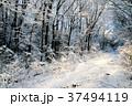 雪 木 森の写真 37494119
