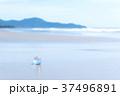 ビーチ 環境 グローバルの写真 37496891