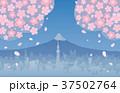 桜 花吹雪 富士山のイラスト 37502764