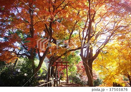 長篠城 秋 紅葉5(遊歩道) 37503876