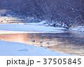 鶴居村 タンチョウ 鶴の写真 37505845