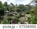 グヌン・カウィ・スバトゥ寺院 37506906