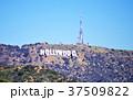 オブジェ、ハリウッド 37509822