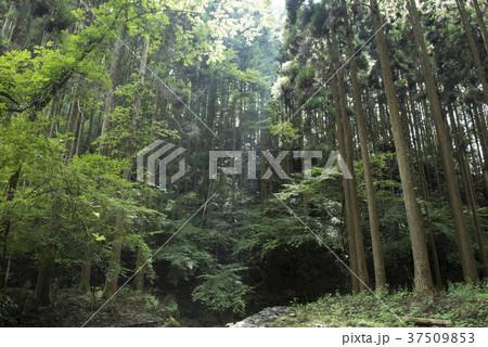 鹿ヶ壺の森 (兵庫県姫路市安富...
