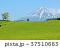 富士山 青空 茶畑の写真 37510663