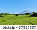 富士山 青空 初夏の写真 37510667