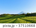富士山 青空 初夏の写真 37510668
