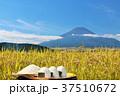 山梨県 富士山と新米のおにぎり 37510672