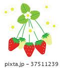 苺 フルーツ 果物のイラスト 37511239
