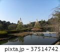 千葉公園の雪吊りと青空 37514742