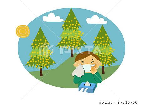 花粉症と杉のイラスト。アレルギーのイメージイラスト。 37516760